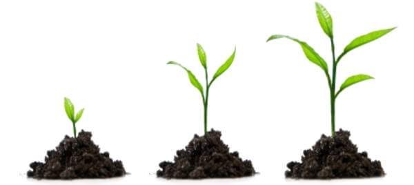 Lead Nurturing & Marketing Automation
